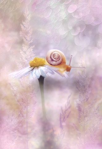 Snail on flower with pink background: biology of life.